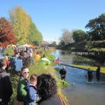 Duck race family event near Havelock North