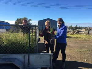 Landowners picking up plants from Waipukurau small