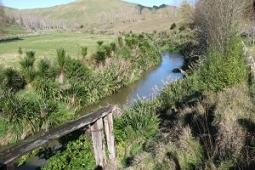Maraetotara Stream enhancement planting