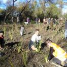 Waiohiki Planting Day last year2