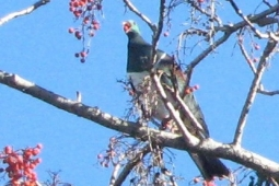 Kereru 2 minutes from downtown Napier 161110